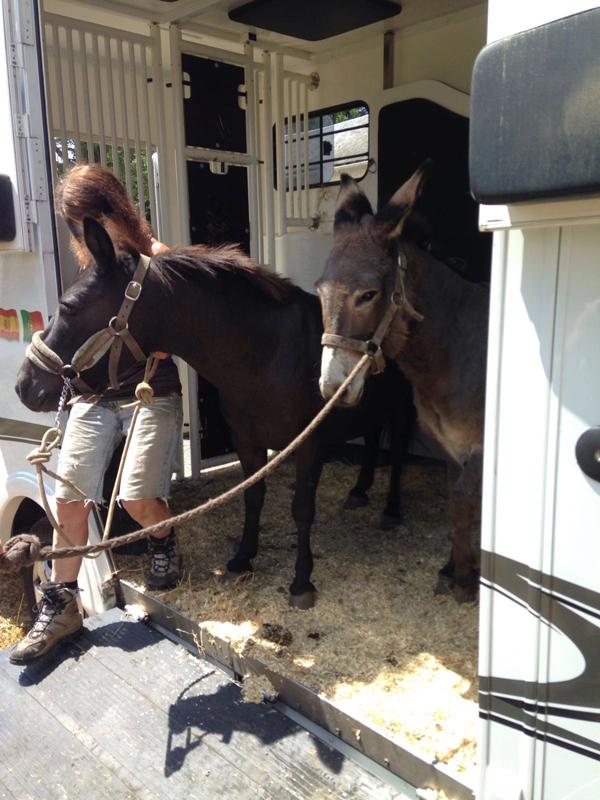 registre animaux chevaux